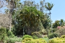 Oct 28th - Ross & Amadas - Noosa Botanic Gardens Run :: NoosaBotanics_43